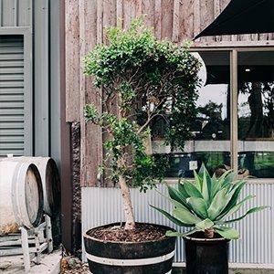 Indoor & Outdoor Plants